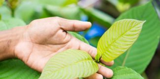 Kratom Leaves Benefit